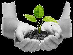crecimiento-terapia-psicologia